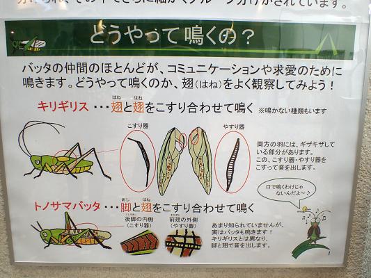 2017.9.10クモの観察会 北本自然公園_f0131669_14221367.jpg