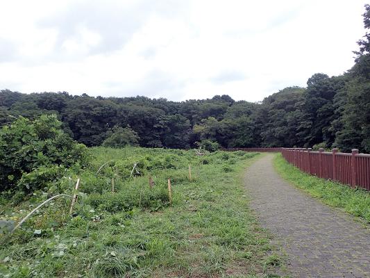 原形保全区間 草刈り記録_f0131669_17313644.jpg