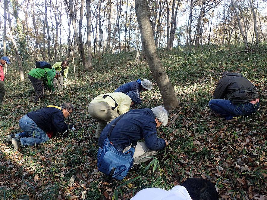 2016.12.3土壌生物研修会 北本自然学習センター_f0131669_20463173.jpg