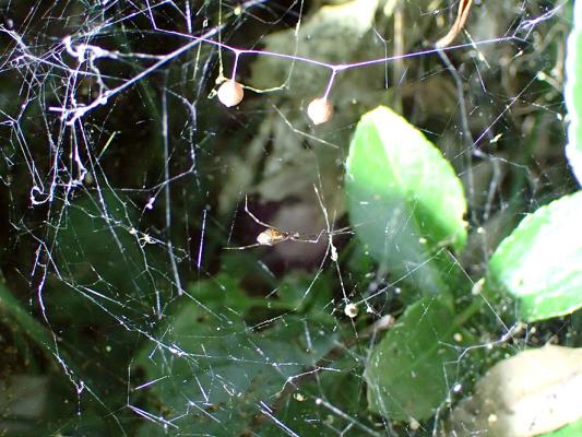 2017.9.10クモの観察会 北本自然公園_f0131669_21592586.jpg